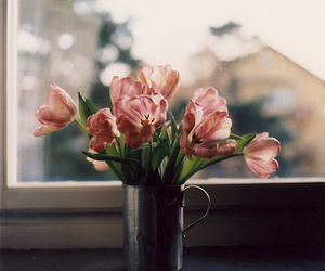 flowers, tulips, and window image