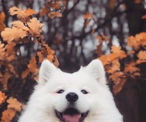 animals, autumn, and dog image