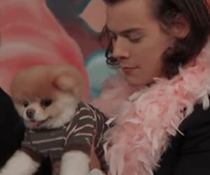 pink, puppy, and Harry Styles image