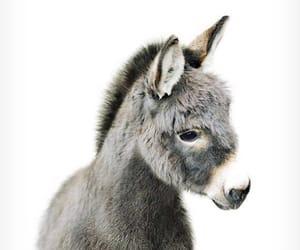 animal, donkey, and cute image