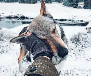 animal, dog, and goal image