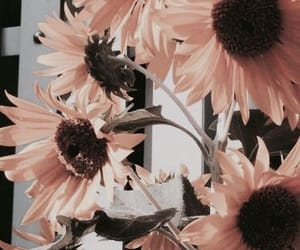 background, flowers, and sunflower image
