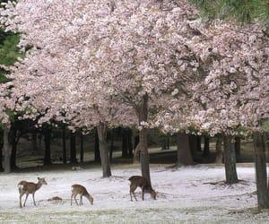 deer, cherry blossom, and sakura image