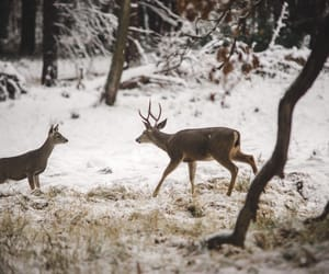 animals, vintage, and winter image