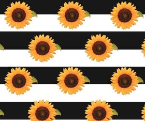 sunflowers and wallpaper image