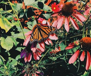 butterfly, daisy, and garden image