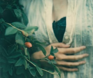 film, garden, and impossible image