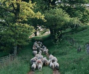 nature and sheep image