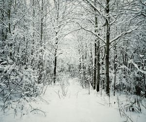 cold, forest, and wonderful image