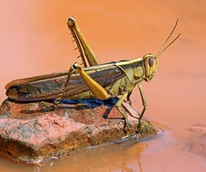 animal, animals, and insect image