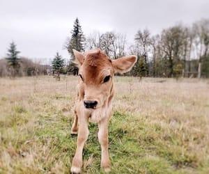 animals, babyboy, and love image