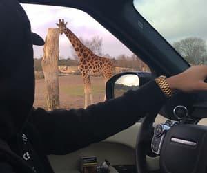 animal, black, and car image