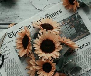 aesthetic, lockscreen, and sunflower image