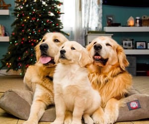 animals, christmas tree, and decorations image