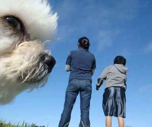 dog, little people, and funky image