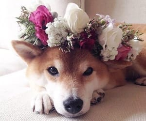 animals, pretty, and love image