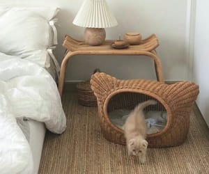 animal, basket, and bedroom image