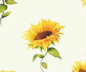 background, flower, and sunflower image