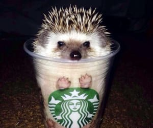 cute, starbucks, and hedgehog image
