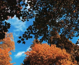 autumn, favorite, and forever image