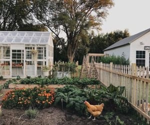 Chicken, country, and green house image