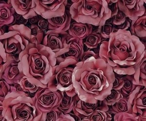 flower, pretty, and roses image