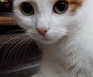 animal, home, and sweet image