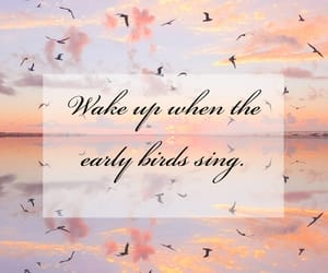 birds, morning, and motivation image