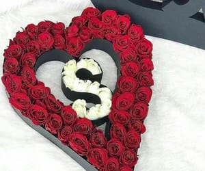 beauty, roses, and white image