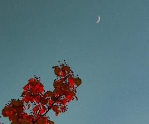 blue, flowers, and moon image