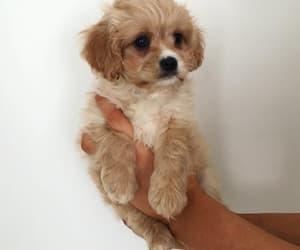 dog, puppy, and instagram dog image