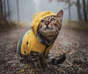 cat, forest, and raincoat image
