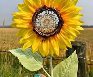 flowers, sunflower, and hippie image