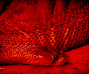 aesthetic, red, and serpent image