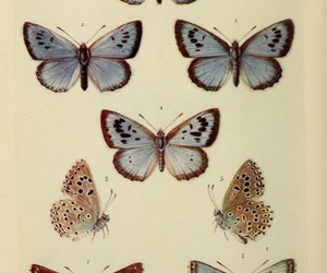 butterfly, vintage, and taxidermy image