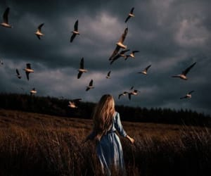birds, hope, and nature image