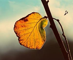 autumn, beautiful, and birds image