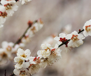 beautiful, blossom, and photography image
