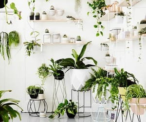 plants, home, and green image