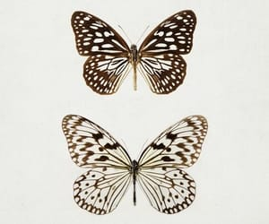 butterfly, vintage, and art image