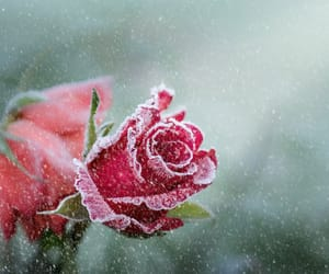 flowers, frost, and nature image