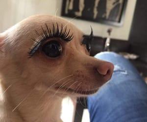 meme, dog, and makeup image