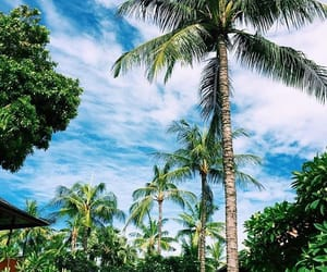 nature, summer, and tropical image