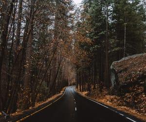 autumn, nature, and adventure image