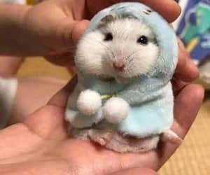 animal and hamster image