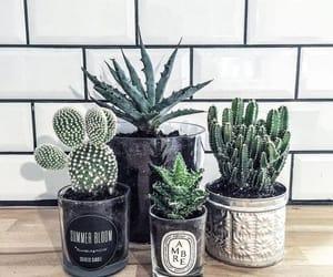 environment, plants, and environmental friendly image