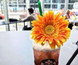 aesthetics, drinks, and flower image