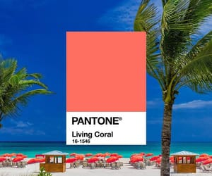 color, pantone, and licing coral image