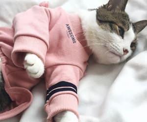 cat, cute, and cute cat image