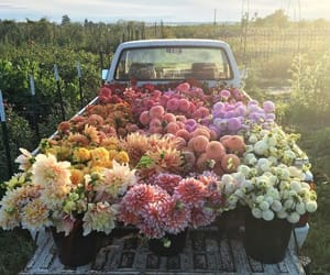 flowers, gorgeous, and flowers truck image